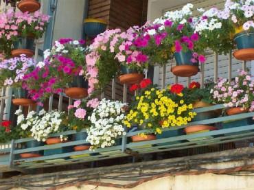 71 Inscritos En El Concurso Flores En Balcones Y Ventanas - Fotos-de-balcones-con-flores