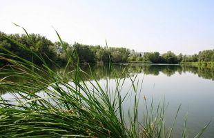 Rutas: Un oasis cercano, el Henares por Azuqueca