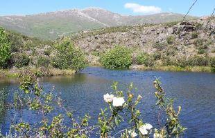 Rutas: El jaral  ha florecido bajo el Ocejón