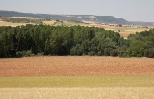 Entre ríos y caracoles, de Matillas a Villaseca de Henares