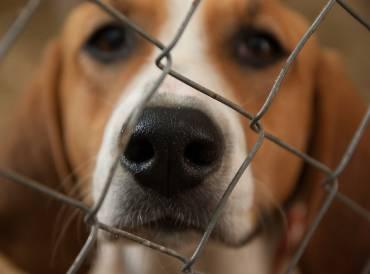 Se buscan soluciones a la saturación del albergue canino de